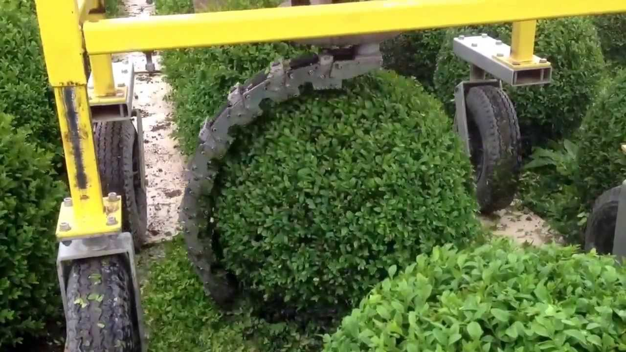 Garden Wisdom - Trimming machines cut hedges perfectly