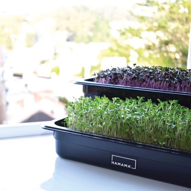HAMAMA Home Microgreens Growing Kit